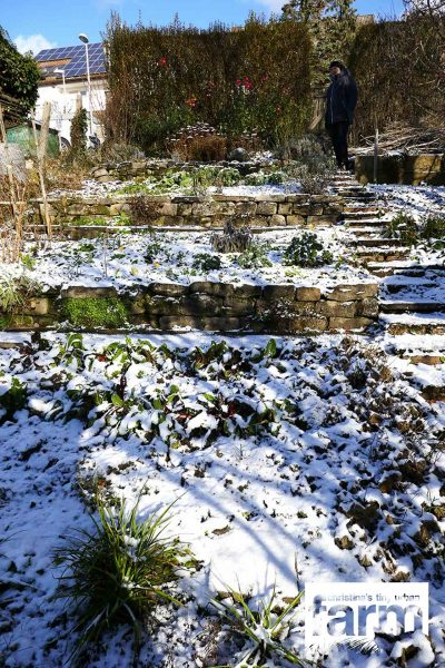 View of the vegetable patches with snow.