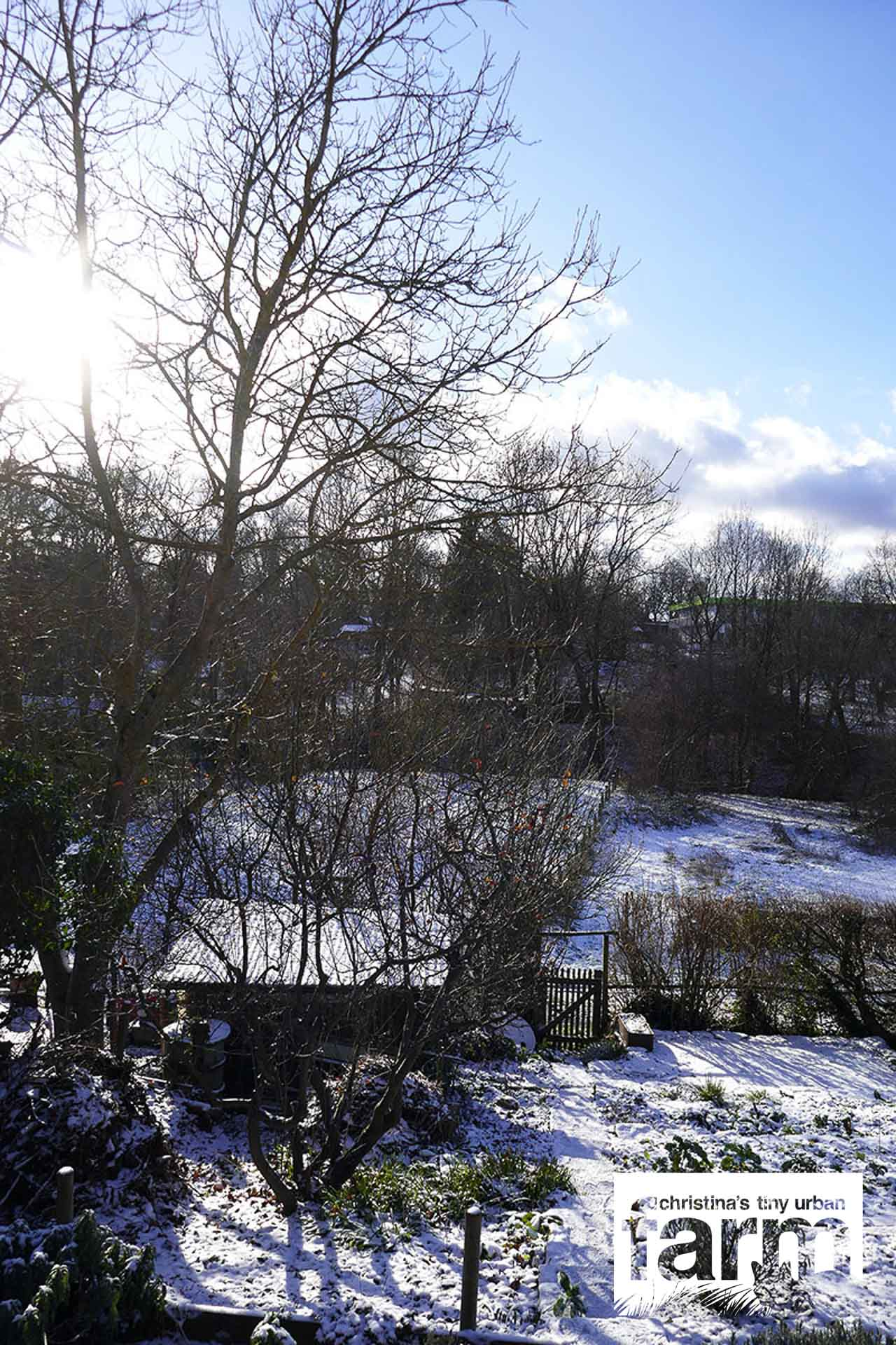 View of the garden and its surroundings in winter.