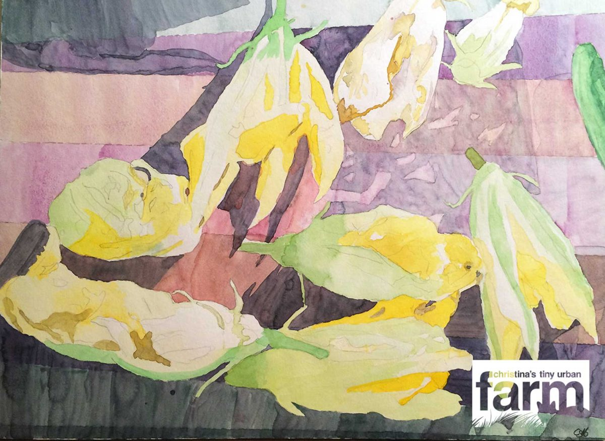 Water color painting of Zucchini Blossoms