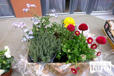 Flower arrangement with blue forget-me-nots, red-pink daisies, white pansy and yellow ranunculus.